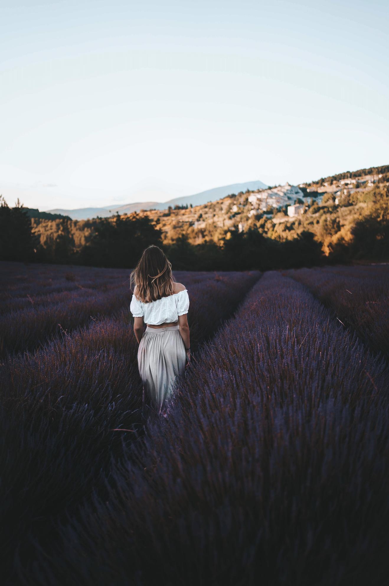 aurel lavendes